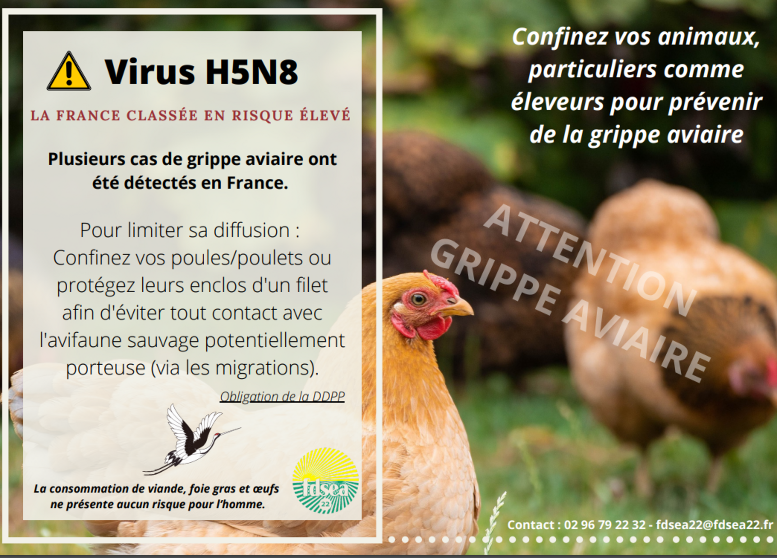 Prévention contre le virus de la grippe aviaire